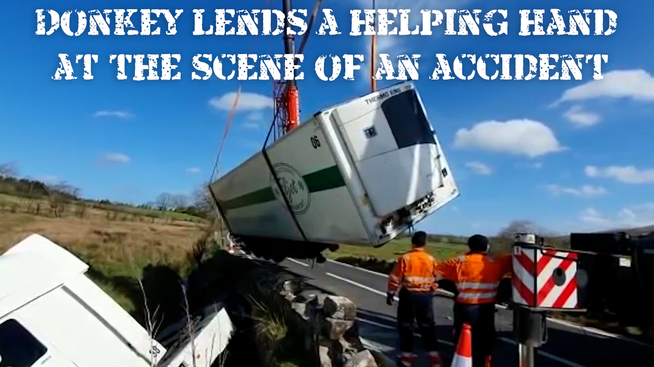 Donkey lends a helping hand at the scene of an accident