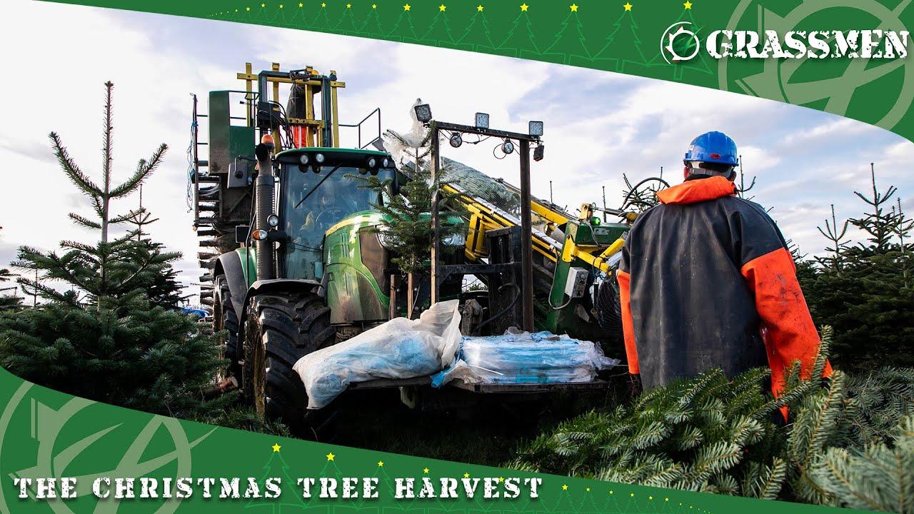 The Christmas Tree Harvest