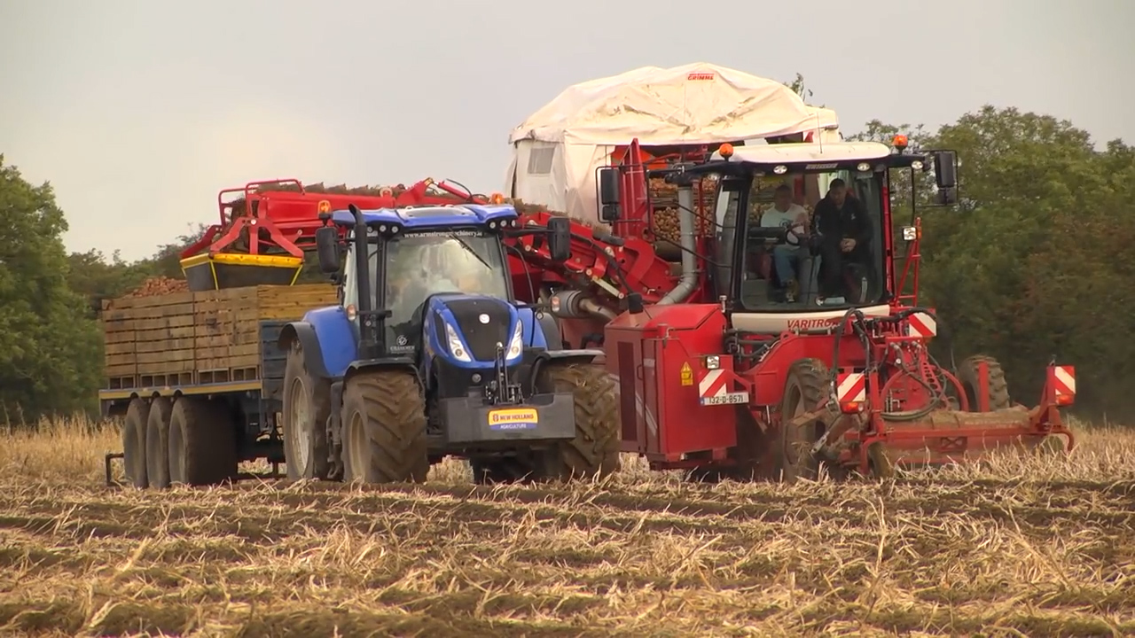 Country Crest Potato Harvest 2016