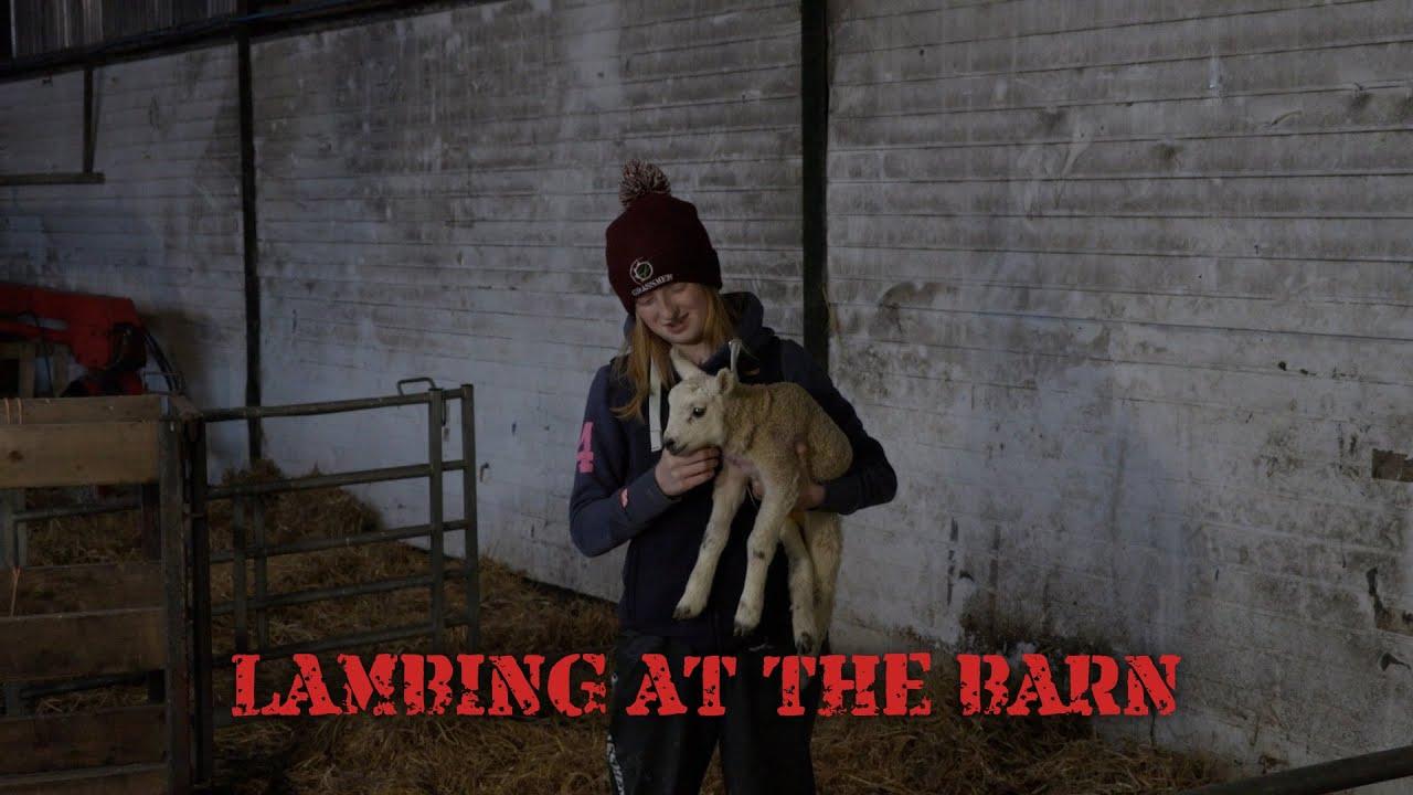 Lambing at the Barn!