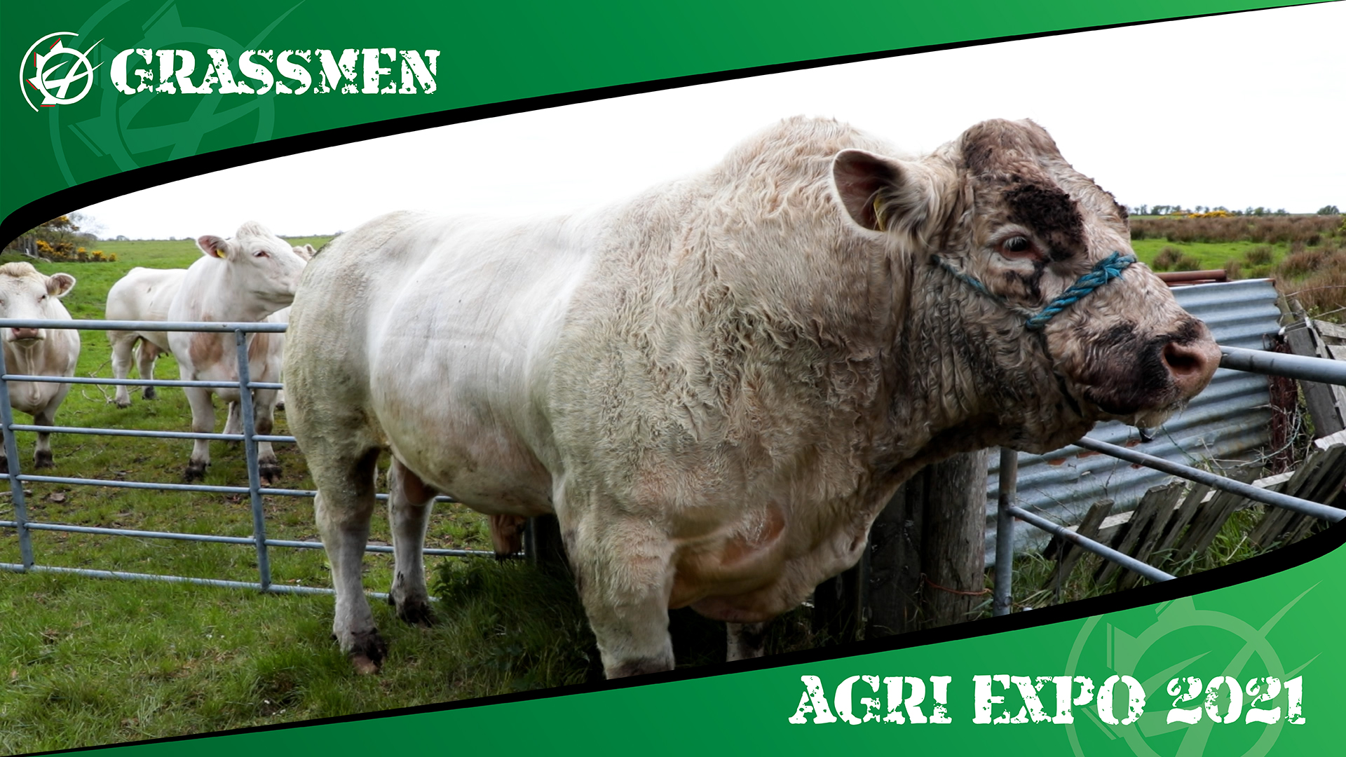 CLOUGHER FARM BEEF CATTLE - GRASSMEN AGRI EXPO DAY 1